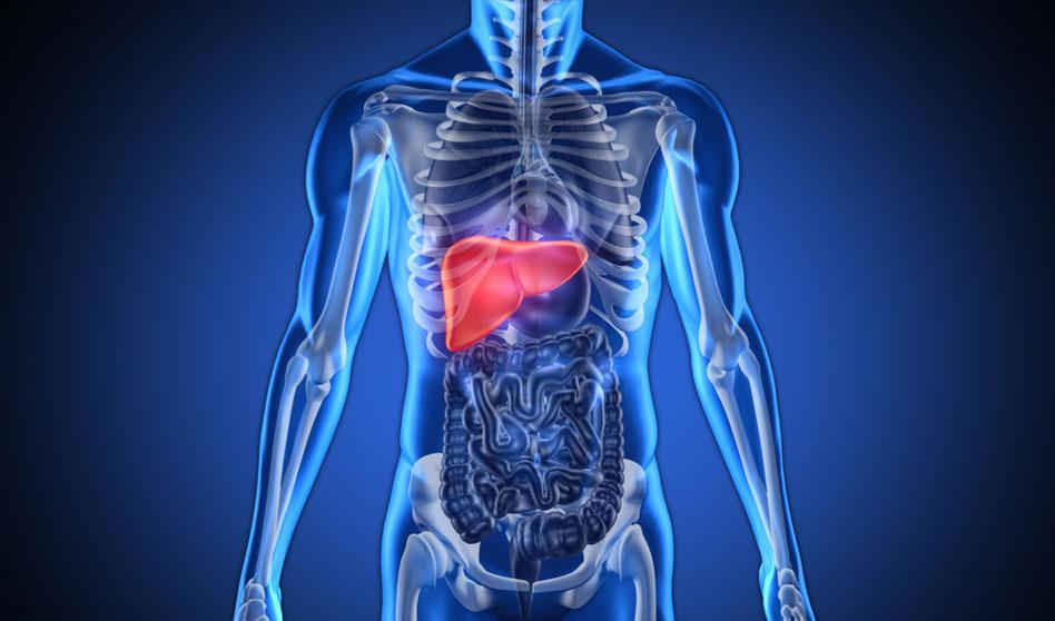 Limpieza hepatobiliar – ¿Por qué y para qué hacer una?