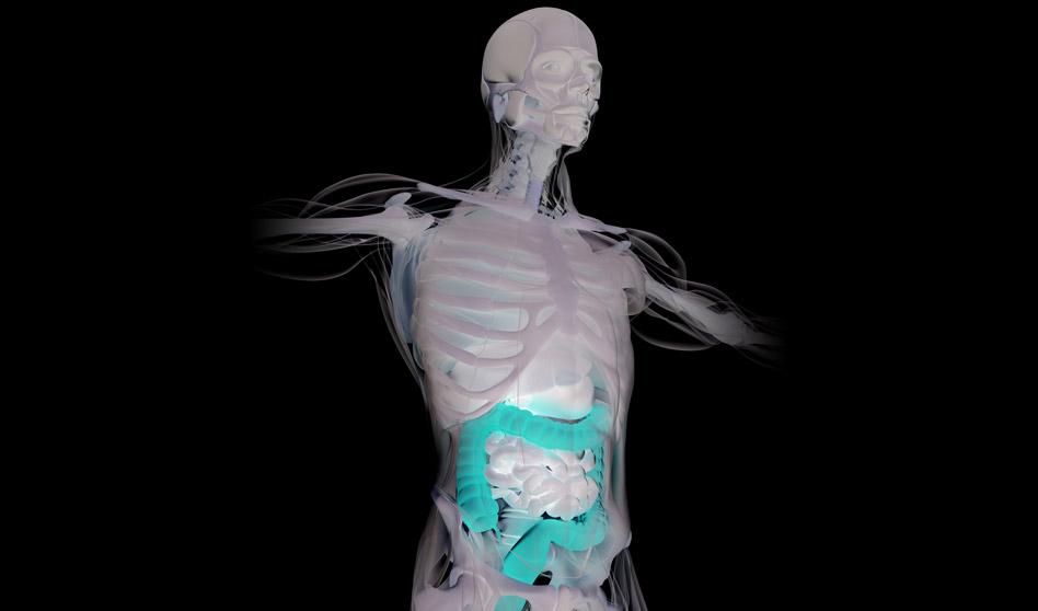 Salud del colon – La salud de nuestro cuerpo empieza en el colon
